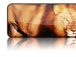 LION   STD 2009 !