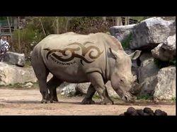 Носорог (Neiyamax)