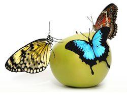 Яблоко жизни