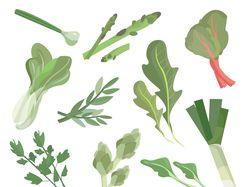 Вектораная иллюстрация овощи