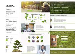 Сайт заказа тибетского чая
