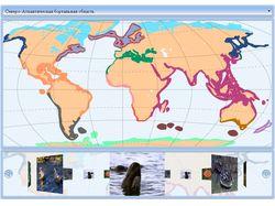 Зоогеографическое районирование мирового океана