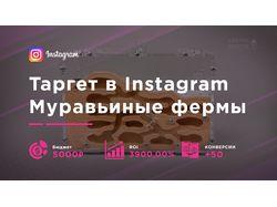 Таргет в Instagram для муравьиных ферм