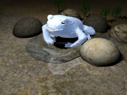 Голубая лягушка