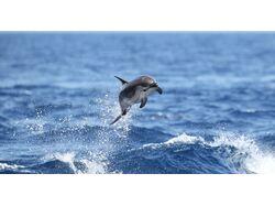 Переклад аналітики щодо збереження китоподібних