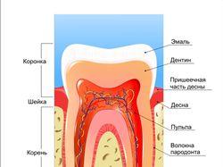 Зуб(вектор)