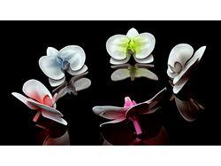 Фарфоровые орхидеи на отражающем полу