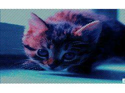 Bb_cat