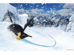 Пингвин-серфинг