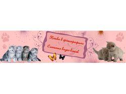 Шапка на сайт о кошках