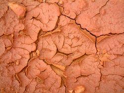 кора земного мозга