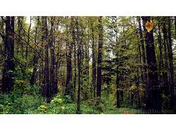 Обработка леса