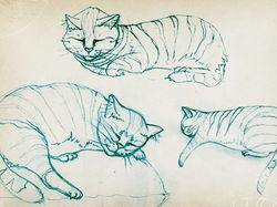 Cat, draft-scetch